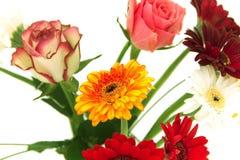 Gerberas and roses, flowers Stock Photos