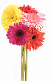 Gerberas in Vase royalty free stock images