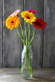Gerberas in a vase Stock Photography