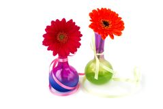 Gerberas in vases Stock Image