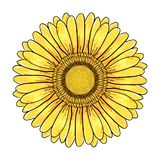 Gerberatusenskönablomma, färgrikt gult huvud som isoleras på vit bakgrund, blom- illustration Vektorpenna och färgpulver för hand stock illustrationer