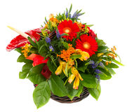 Gerbere rosse naturali ed alstroemerias in un canestro Fotografia Stock