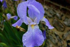 gerberoy in Francia con i bei fiori immagine stock