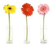 gerbers 3 вазы Стоковая Фотография