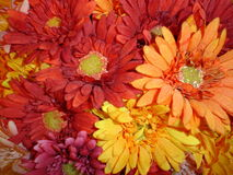Gerbers. Artificial gerbera daisies stock photo