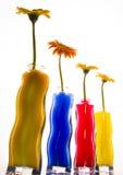 Gerbers colorés Photo libre de droits