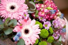 Gerbers cor-de-rosa grandes Foto de Stock