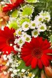 Gerbers en bloemen stock foto's