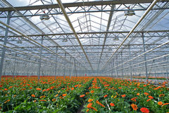 Gerbers Greenhouse Stock Photo