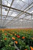 Gerbers Greenhouse Stock Photos