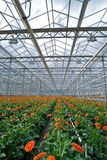 Gerbers Greenhouse Stock Images