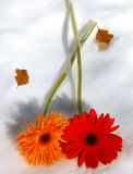 Gerbers on Ice. Two varieties of Gerbera daisies with dead leaves on a blanket of snow. Late winter sun has them casting long shadows. Represents love royalty free stock images