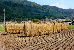 Gerbes de riz Photographie stock libre de droits
