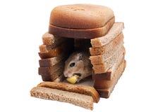 Gerbil myszy maty ser w domu chlebów kawałki Odizolowywający na Białym tle Realty pojęcie Obrazy Royalty Free