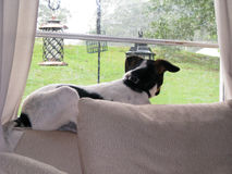 Geregneter heraus Hundstag Lizenzfreie Stockfotografie
