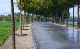 Geregneter nasser Weg im Park umgeben durch Gras Stockfotografie