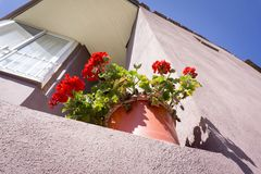 Flowerpot low angle view. Gerenium flowers at flowerpot low angle view stock images