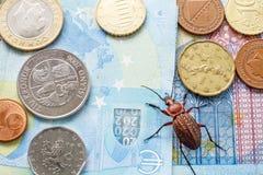 Geriebener Käfer auf der Rechnung zwanzig Euros, kleine Münzen von Europa Konzept: Geldk?fer stockfoto