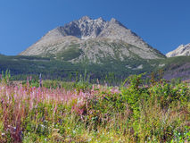 Gerlach Peak and colorful plants Royalty Free Stock Photo