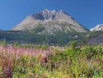 Gerlach Peak y plantas coloridas Foto de archivo libre de regalías