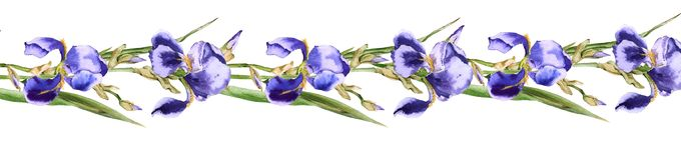 Gerland dai fiori dell'iride Isolato su priorità bassa bianca Fotografia Stock Libera da Diritti