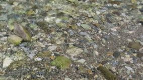 Gerlos strumienia spływanie skały w ziemi rzeka zdjęcie wideo