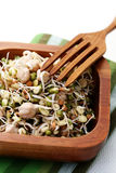 Germ buds. Bowl full of germ buds - healthy eating Royalty Free Stock Photography