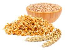 Germ of cereals Stock Photos