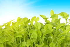 Germ of green plants on the background of the sk Stock Photo