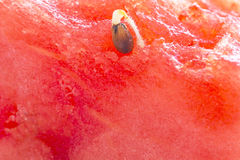 Germ of a watermelon Royalty Free Stock Photos