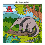 German alphabet, letter A (anteater and background). German alphabet, vector illustration (letter A). Color image (anteater and background Vector Illustration