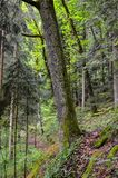 German bavarian forest Stock Photo