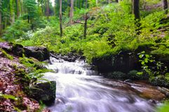 German Beech forest at Pfalz or Black Forest close to Kaiserslautern royalty free stock image