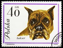 German Boxer (Canis lupus familiaris), Dogs serie, circa 1963. MOSCOW, RUSSIA - MAY 25, 2019: Postage stamp printed in Poland shows German Boxer (Canis lupus stock photo
