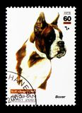 German Boxer (Canis lupus familiaris), serie, circa 2003. MOSCOW, RUSSIA - DECEMBER 21, 2017: A stamp printed in Afghanistan shows German Boxer (Canis lupus stock images