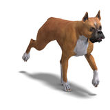 German Boxer Dog Royalty Free Stock Image