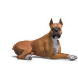 German Boxer Dog. 3D rendering with clipping path Stock Image