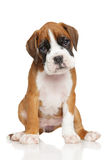 German Boxer puppy on white Stock Photography