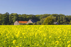 German countryside landscape with yellow canola field Royalty Free Stock Photography