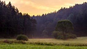 German Foggy Morning Stock Image
