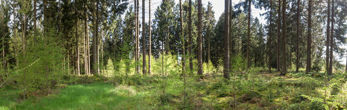 german forest high definition panorama Royalty Free Stock Photography