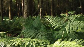 German forest stock video footage