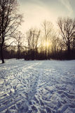 German forest in winter with Snow Bayern, Munich Stock Photography