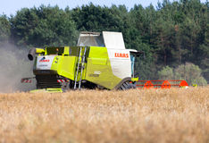 German havester Claas Lexion 650 works on a corn field Stock Photo