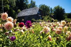 German house with flowers in Frutillar in Chile stock photos