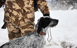 German hunting dog Stock Images