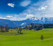 German idyllic pastoral countryside in spring with Alps in backg Royalty Free Stock Photography