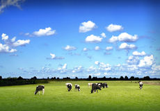 German landscape Royalty Free Stock Photo