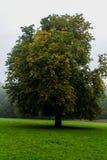 German Nature autumn park Stock Photos