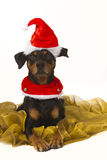 German Pinscher playing Santa Royalty Free Stock Photography